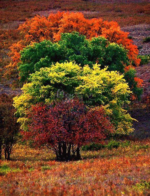 Tyler作品:四棵树