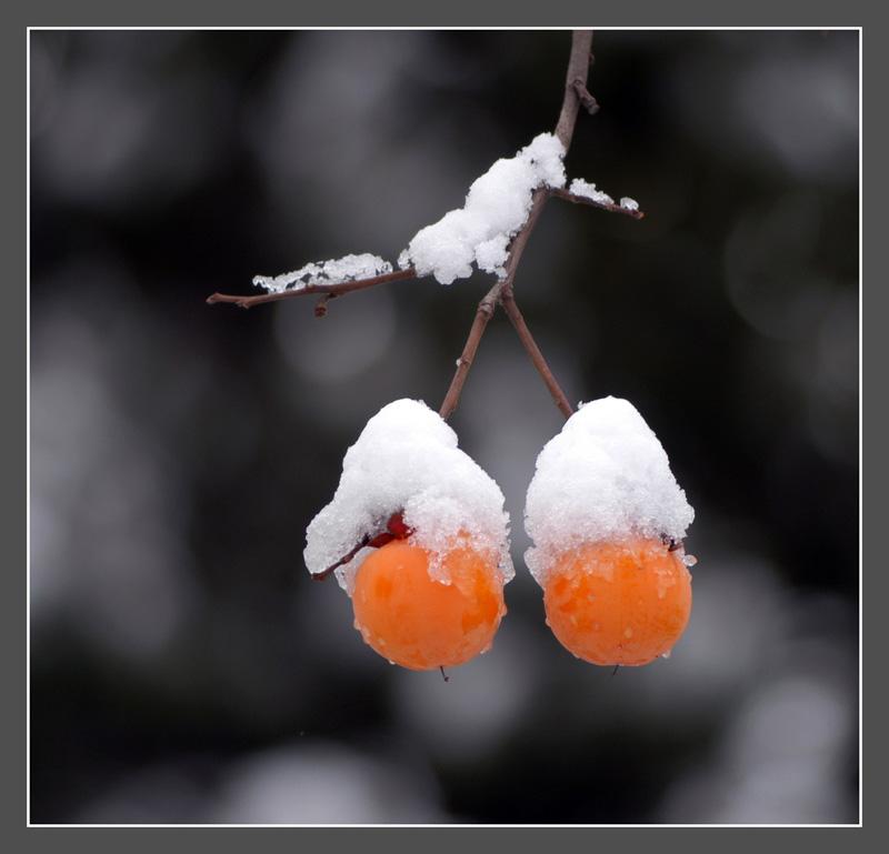 cncjj作品:初雪中的秋实