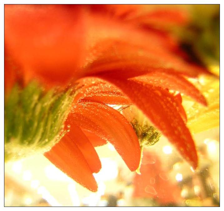 流沙作品:花卉