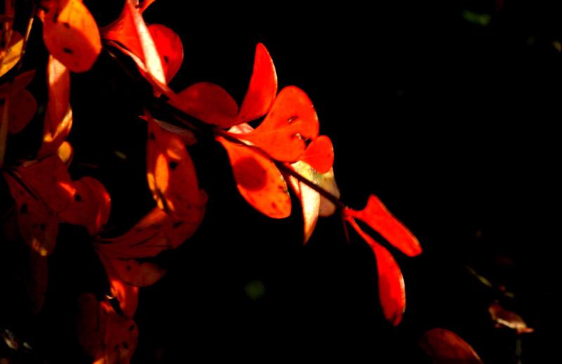 xyg作品:红叶