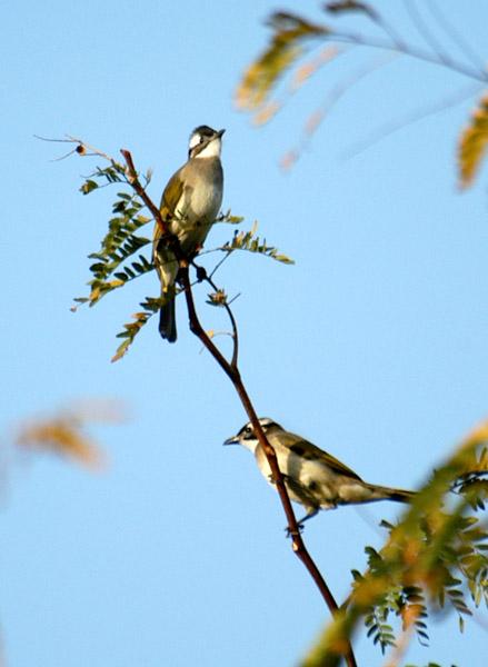 xyg作品:两个山雀