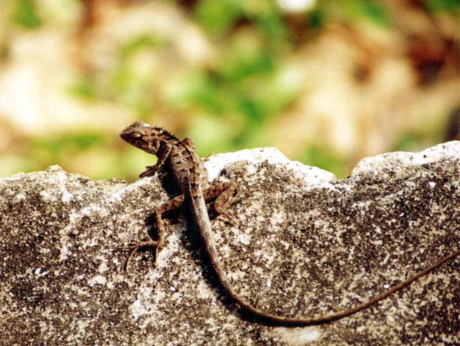 xyg作品:蜥蜴