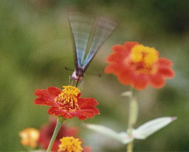 xyg作品:蝴蝶飞来采花蜜