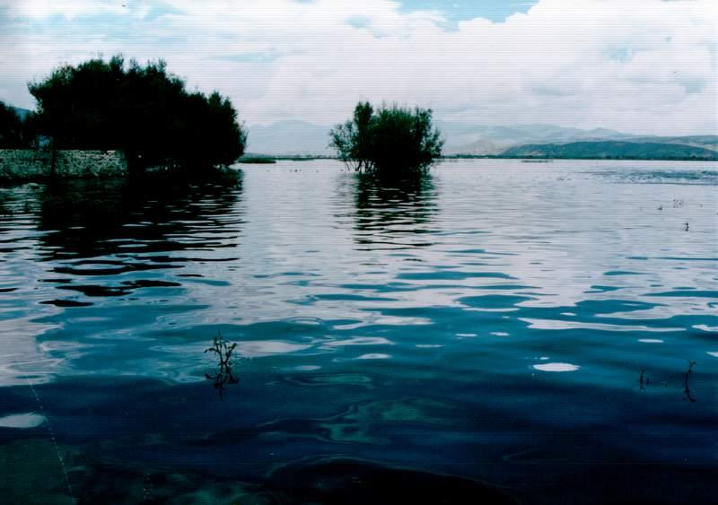 歧山猴作品:水中的树丛