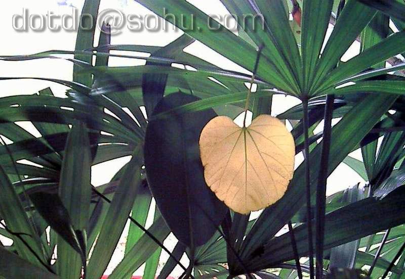 歧山猴作品:落叶