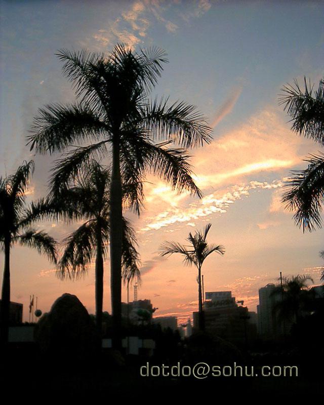 歧山猴作品:椰树夕照