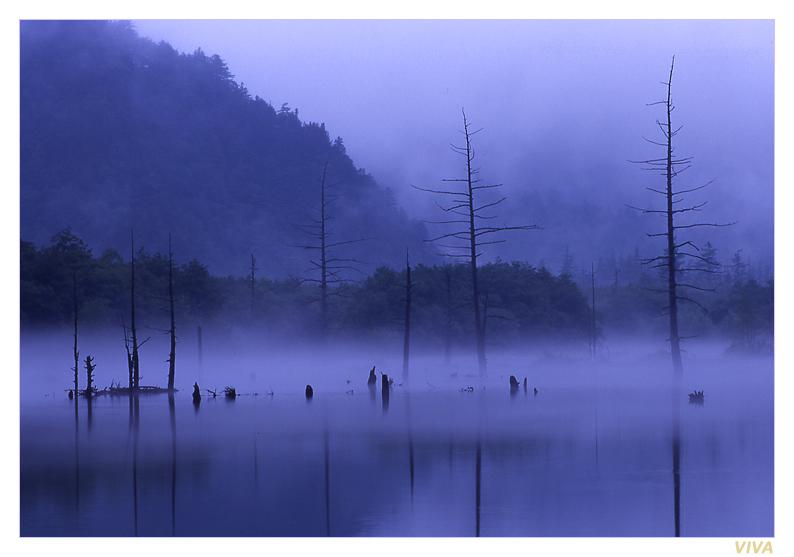VIVA作品:晨雾缭绕(1):枯木
