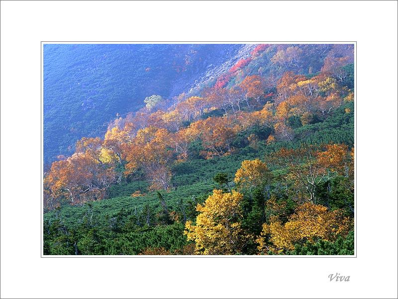 VIVA作品:2002之秋(7):山野.