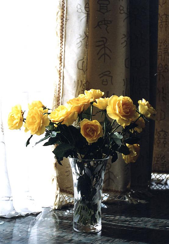 秋天上午的阳光温暖迷人 -大衰神摄影作品 秋日的黄玫瑰