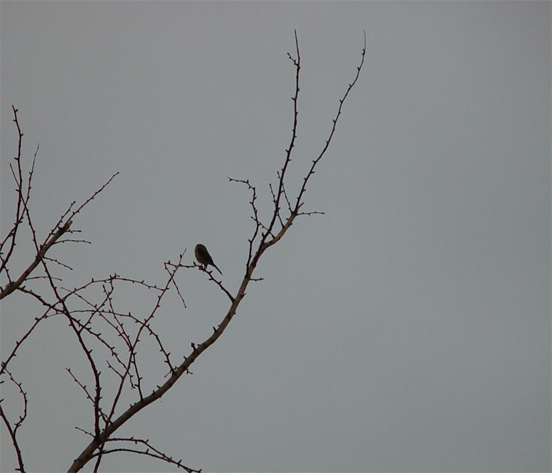 易东作品:寒鸟