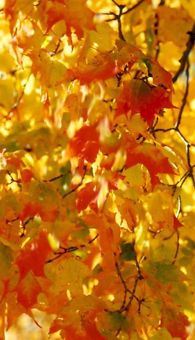 闲云居士作品:秋的印象