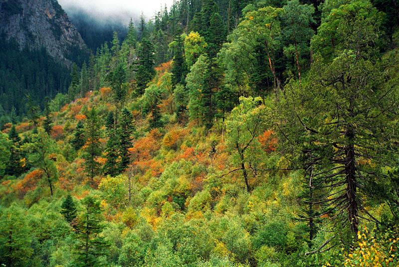 pyxyz作品:九寨山林的秋色