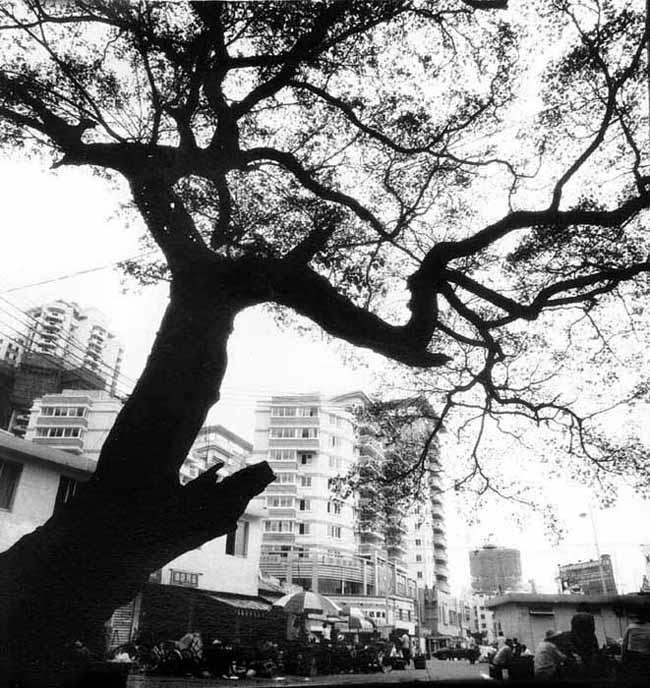 xzg5545作品:树4