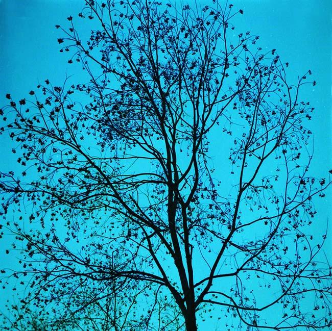 xzg5545作品:暮色中的树