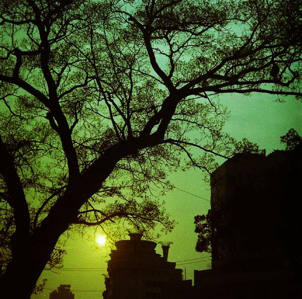 xzg5545作品:暮色中的树2