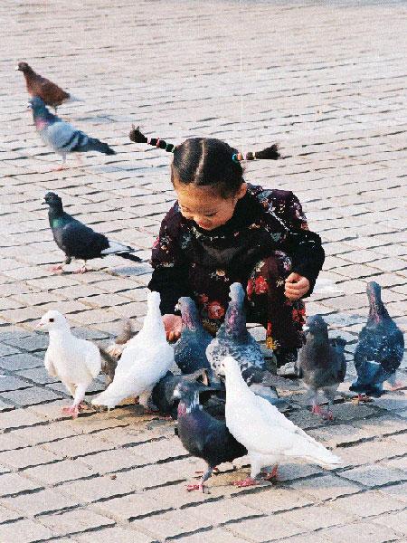 原天作品:喂鸽子的小女孩