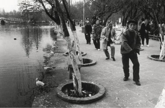 海鸥与人 云南昆明 1997 年 吴家林摄